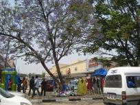 market under a Jakaranda tree